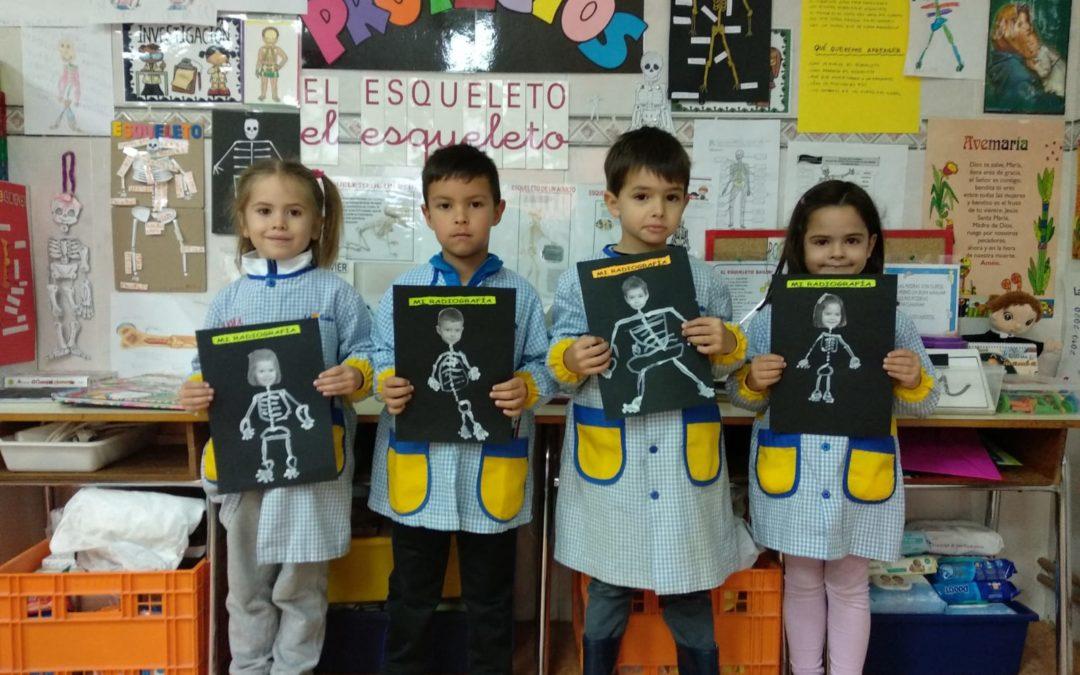Proyecto del esqueleto en 3º de Ed.infantil